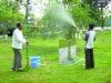 Spraying trees